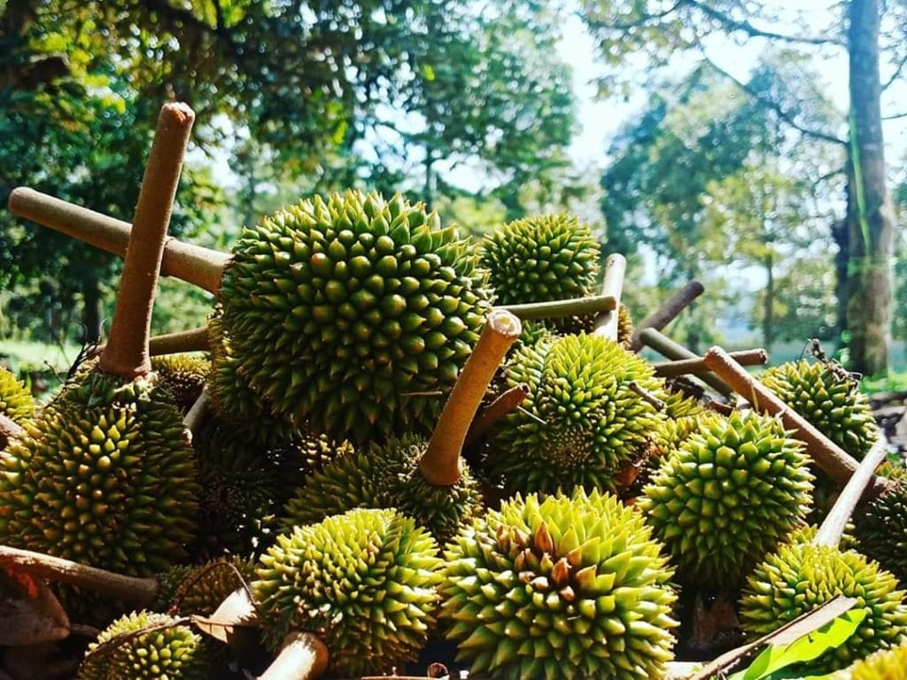durian delivery Seremban